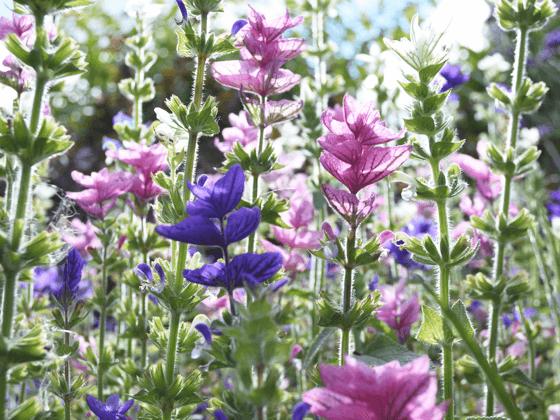 foundation-wildflowers-image